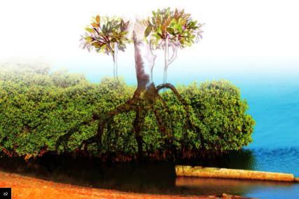 Mangrove, where fresh and marine waters meet